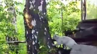 Смешные Коты! Тролль и кот. (Troll  and cat). Приколы с животными.