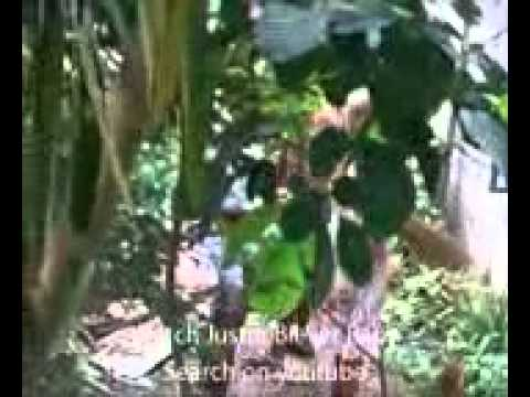 EDIE SEñIORES SCANDAL -This video is from barangay of Sabang Tuy Batangas