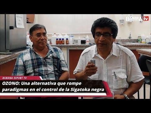 OZONO: Una Alternativa Que Rompe Paradigmas En El Control De La Sigatoka Negra