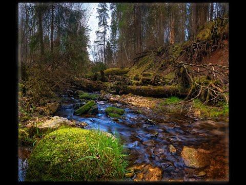 Щапова Гора (овраг, прорезающий пласты известняка, ручей). Старица, Тверская область.