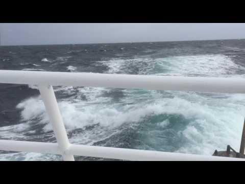 Offshore Seabass