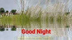 Good Night SMS Video | Good Night Whatsapp Message  | Good Night Message | Good Night SMS