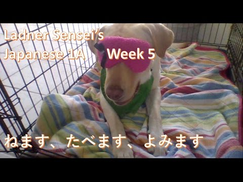 MVS J1A Week 5 days of week kikimasu nemasu tabemasu yomimasu sumo japanese lesson
