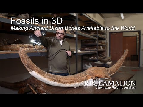 Fossils In 3D: Making Ancient Bison Bones Available To The World