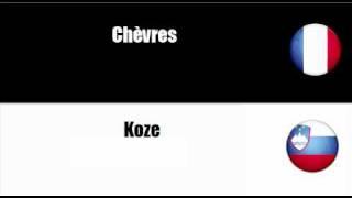 FRANCAIS + SLOVENE = Bétail, cheptel et petits animaux