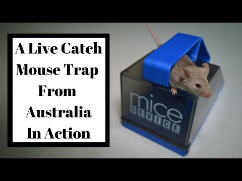 A Live Catch Mouse Trap From Australia In Action. (Mice Device Mouse Trap)