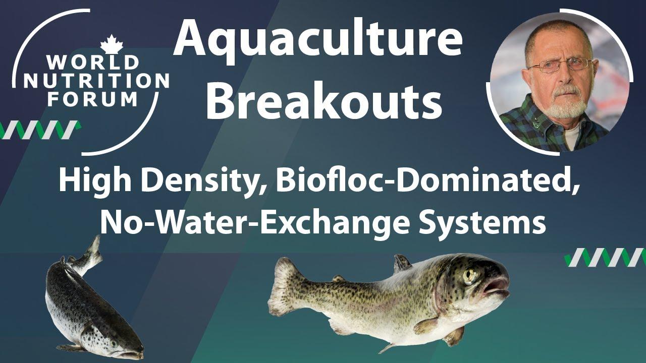 Sustainable Shrimp Farming: High Density, Biofloc-Dominated