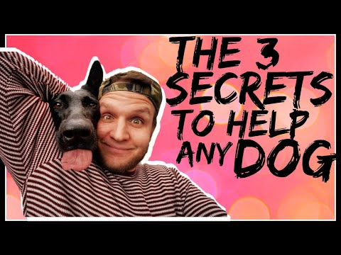 3 Secrets Dog Training Tips- How to build a better relationship with your dog