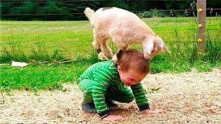 إضحك حتى الدموع 😂😂على أجمل مقاطع الأطفال مع الحيوانات || دقائق من المتعة والضحك