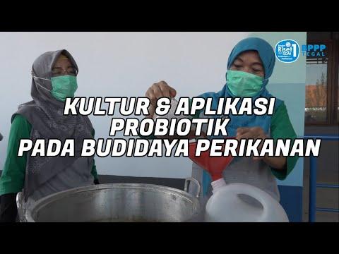 Kultur U0026 Aplikasi Probiotik Pada Budidaya Perikanan - BPPP Tegal