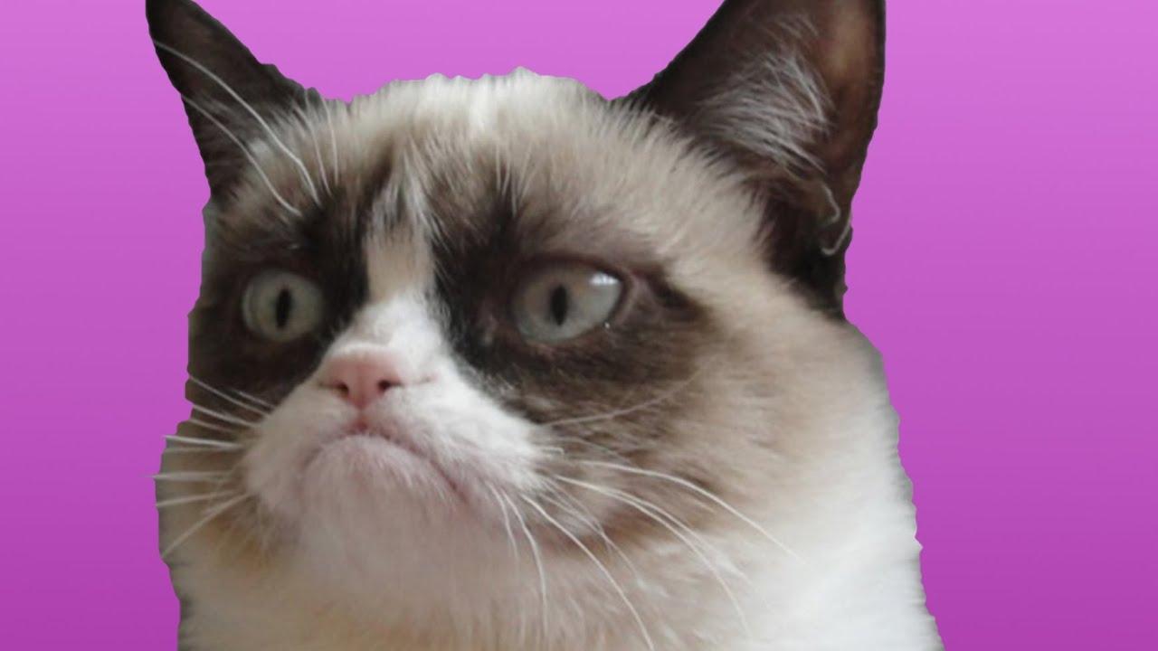 Cins türk van kedi: açıklama, fotoğraf, yorumlar