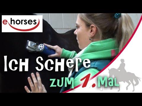 Ich schere zum 1. Mal - sponsored by ehorses & agradi.de