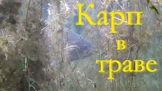 Видео о подводной охоте на карпа в траве(В очередной выходной выбрался на один из своих любимых водоемов на подводную охоту, для того чтобы круто..., 2015-07-10T12:45:45.000Z)