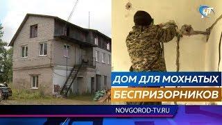 Приют для бездомных животных в Великом Новгороде приобретает реальные очертания