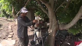 Người Việt với nghề làm vườn ở Hawaii