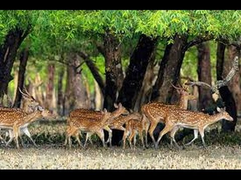 Beautiful Places To See- The Sundarban, Bangladesh (Searchin