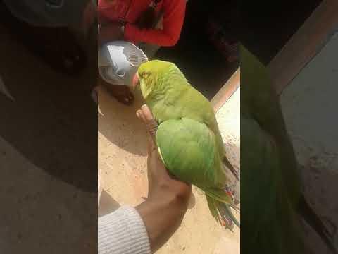 🐦🐦My Parrot In Last Die Position 🐦🐦😭😭😭