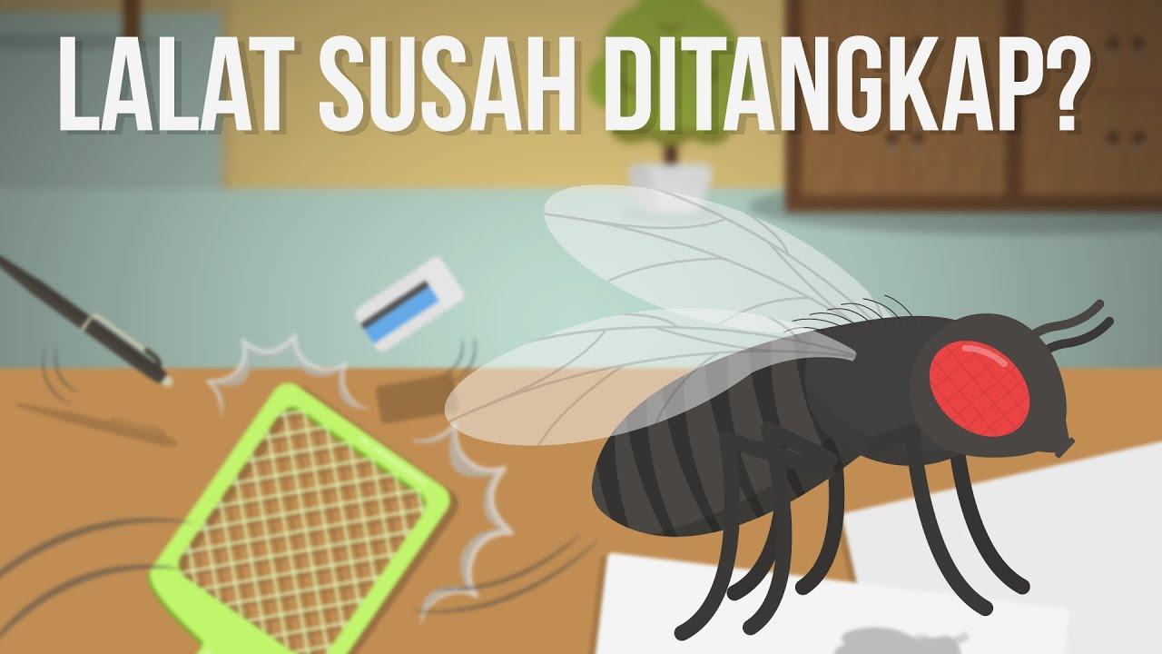 Kenapa Lalat Susah Ditangkap?