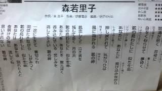森若里子 - 鵜の岬