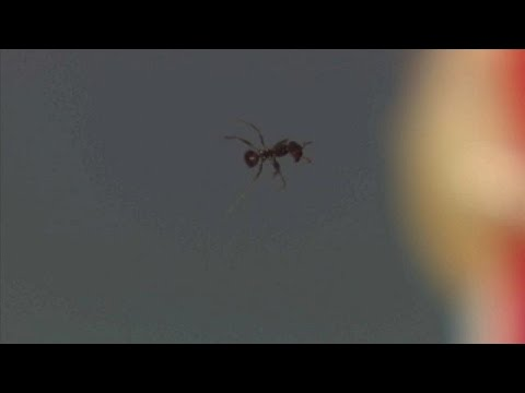Scientists sound off after levitating ants breakthrough