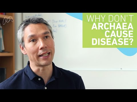 Why don't archaea cause disease?