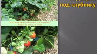 видео Выращивание земляники на садовом участке