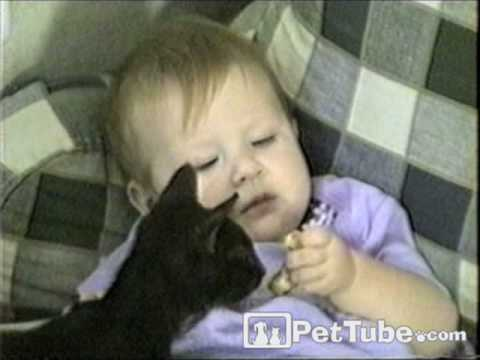 Cat Steals from Baby – PetTube