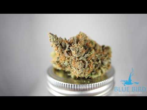 Blue Bird Delivery - Sour Banana Sherbet