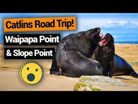 Catlins Road Trip: Waipapa Point & Slope Point –  New Zealand's Biggest Gap Year