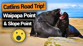Video blog - Catlins Road Trip: Waipapa Point & Slope Point - Day 166