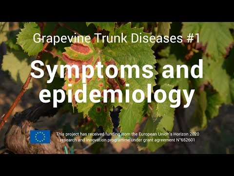Grapevine Trunk Disease #1   Symtoms and epidemiology