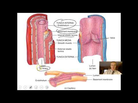 Blood Vessels and Hemodynamics Part 1