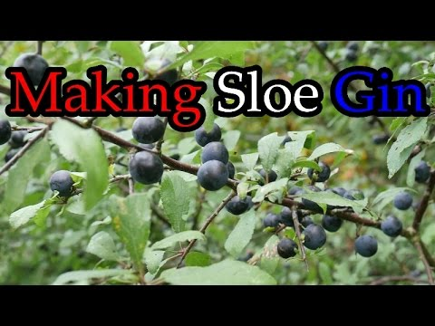 How To Make Sloe Gin >> How To Make Sloe Gin For Christmas