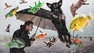Top 5 cơn mưa động vật kỳ lạ bí ẩn - Chưa chắc bạn sẽ tin.