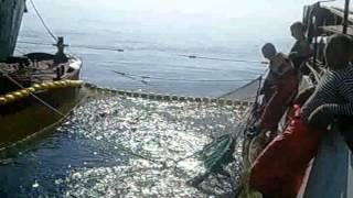 Заливка прорізи червоною рибою
