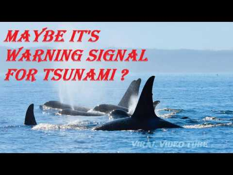 It's Warning Signal for the Tsunami? Blue Whales are Coming out of Sea in Indonesia.