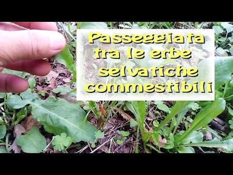 Passeggiata tra le erbe spontanee commestibili
