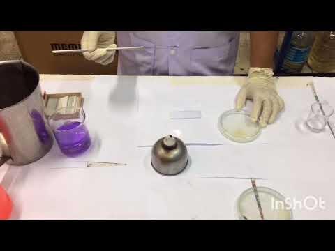 การย้อมสีแบคทีเรียอย่างง่าย (Simple Stain)