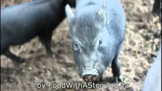 Kleinjongenskraal Farm (Citrusdal, South Africa)