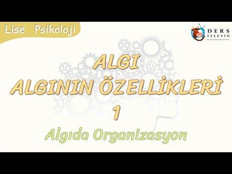 ALGININ ÖZELLİKLERİ - 1 / ALGIDA ORGANİZASYON