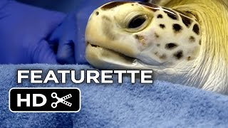 Dolphin Tale 2 Featurette - Sequel To a True Story (2014) - Morgan Dolphin Drama HD
