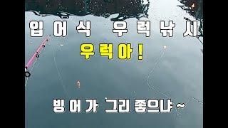 입어식 우럭낚시 우럭아 빙어가 좋냐 ~ 삼길포 만석좌대
