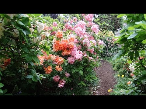 vancouver,-british-columbia---vandusen-botanical-garden---flowers-hd-(2014)