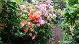 Vancouver, British Columbia - VanDusen Botanical Garden - Flowers HD (2014)