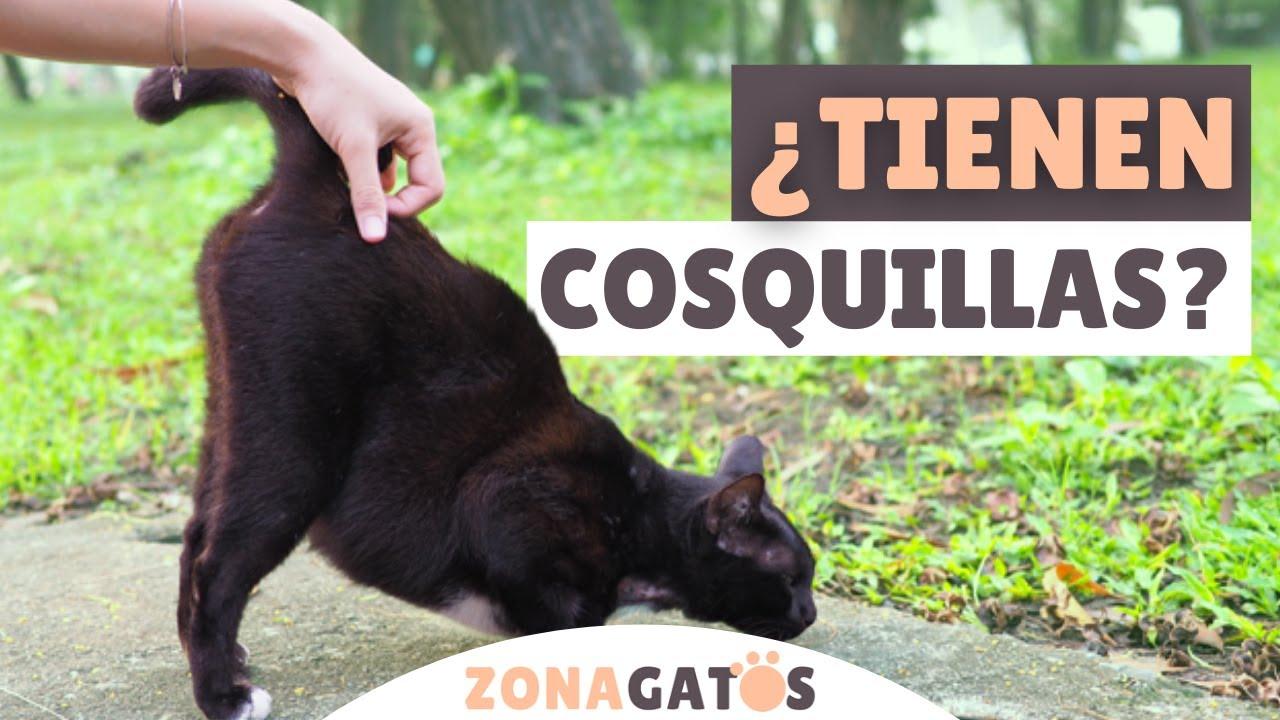 ¿Los gatos TIENEN COSQUILLAS?