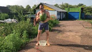 Виктор Блуд Сломал Арбуз Ногами watermelon challenge