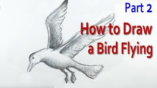 How to Draw a Bird Flying: 2
