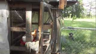 Automatic Hinged Chicken Coop Door Diy