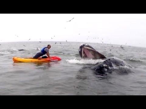 Whale Gatecrashes Kayaker During 22 Pushup Challenge
