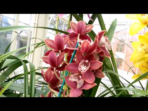 Orchids Dublin show
